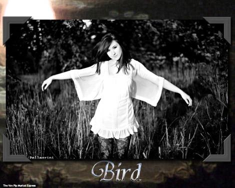 Bird - Photo By Jennifer Pelligrini